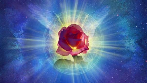 Aripile Trandafirului - Daniel Holeman